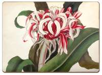 * 4 CorkBack Hardboard Table-Placemats Red Floral Crinum